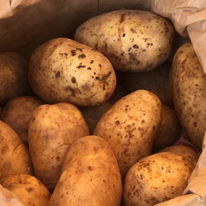 Sagitta potatoes